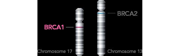 BRCA1 ir BRCA2 genai
