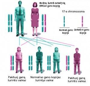 BRCA paveldėjimas